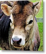 Calf Closeup Metal Print