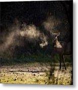 Calf Elk With Steaming Breath At Lost Valley Metal Print