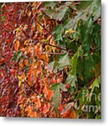 Calico By Nature Metal Print