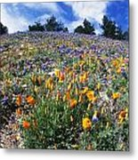 California Poppies And Lupins On A Hill Metal Print
