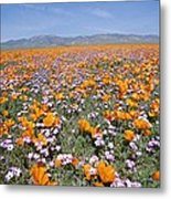 California Poppies And Other Metal Print