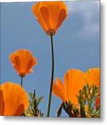 California Poppies Metal Print by Denice Breaux