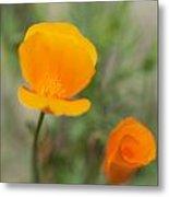 California Poppy Flowers Metal Print