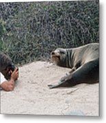 Californian Sea Lion With A Tourist Metal Print by Georgette Douwma