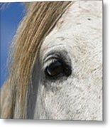 Camargue Horse Equus Caballus Eye Metal Print