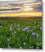 Camas Fields Metal Print