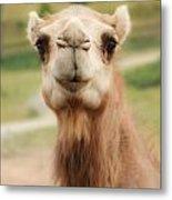 Camel Cameo Metal Print