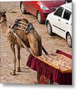 Camel Ready To Take Tourists For A Desert Safari Metal Print