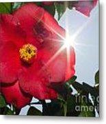 Camellia Flower Metal Print by Mats Silvan