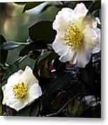 Camellia Nineteen Metal Print
