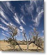 Camelthorn Tree (acacia Erioloba) Metal Print