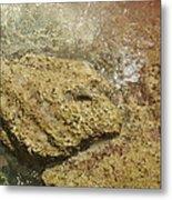 Camouflage Crabs Metal Print