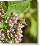 Camphorweed Wildflowers And Honey Bee Metal Print