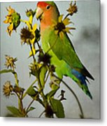 Can You Say Pretty Bird? Metal Print
