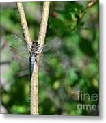 Can You See Me Metal Print