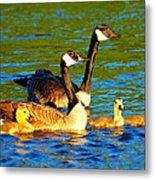 Canada Geese Family Metal Print by Paul Ge