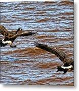 Canada Geese In Flight Lake Superior Metal Print