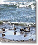 Canada Geese In Lake Erie Metal Print