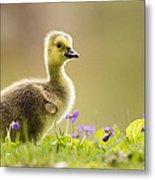 Canada Goose Baby Metal Print