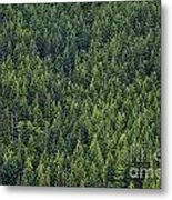 Canadian Boreal Forest. Metal Print
