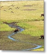 Canadian Geese And Bison, Yellowstone Metal Print by Brian Bruner