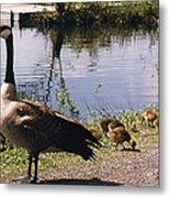 Canadian Geese At Trojan Lake Ny Metal Print