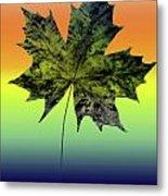 Canadian Maple Leaf Metal Print