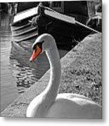 Canal Swan Metal Print