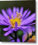 Candles On A Daisy Metal Print