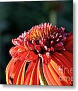 Candy Corn Cone Flower Metal Print
