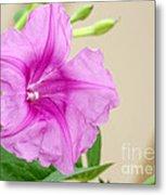 Candy Pink Morning Glory Flower Metal Print