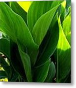 Canna Lilly Metal Print by Susan Saver