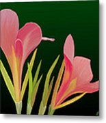 Canna Lilly Whimsy Metal Print by Rand Herron