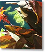 Canna Lily And Water In San Angelo Civic League Park Metal Print by Louis Nugent