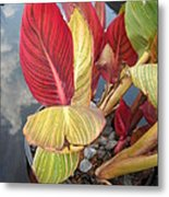 Canna Lily Fall Colors Metal Print
