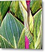 Canna Lily Foliage Metal Print