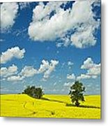 Canola Field And Clouds, Rathwell Metal Print