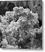 Canyon Treasure Metal Print