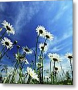 Cape Cod Summer Metal Print