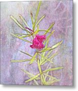 Captured Blossom Metal Print