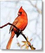 Cardinal 2 Metal Print