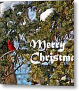 Cardinal Christmas Card Metal Print