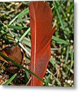 Cardinal Feather Metal Print