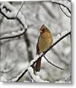 Cardinal Female 3652 Metal Print