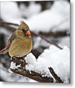 Cardinal Female 3679 Metal Print
