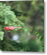 Cardinal In Flight Metal Print