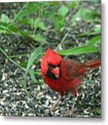 Cardinal In Springtime Metal Print