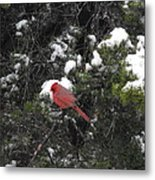 Cardinal In The Snow Metal Print by Rebecca Cearley