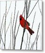 Cardinal In Willow  Metal Print