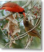 Cardinal Kisses Metal Print